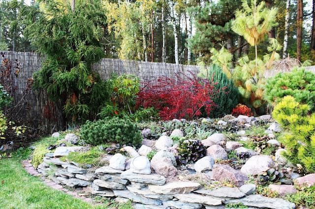 jesiene kolory w ogrodzie, jakie rośliny wyglądaja najpiękniej jesienią,kolor czerwony w ogrodzie,piękny ogród jesienią,rabata w kolorze czerwonym, czerwone rośliny, któe rośliny zmieniają kolor jesienią na jesień,porady inspiracje ogrodowe