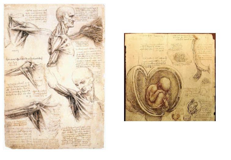 Hibili Corpus: El cuerpo y el arte en la historia