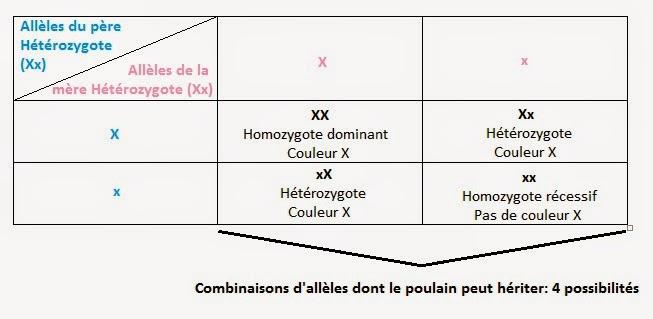 La génétique des robes équines pour les nuls: partie 1.   La Crinière Blonde, blog de réflexions ...