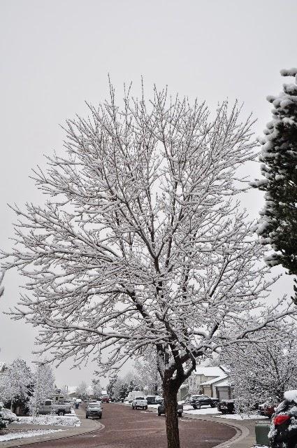 front yard snow storm coloradoviews.filminspector.com