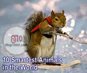 Top 10 Smartest Animals in the World