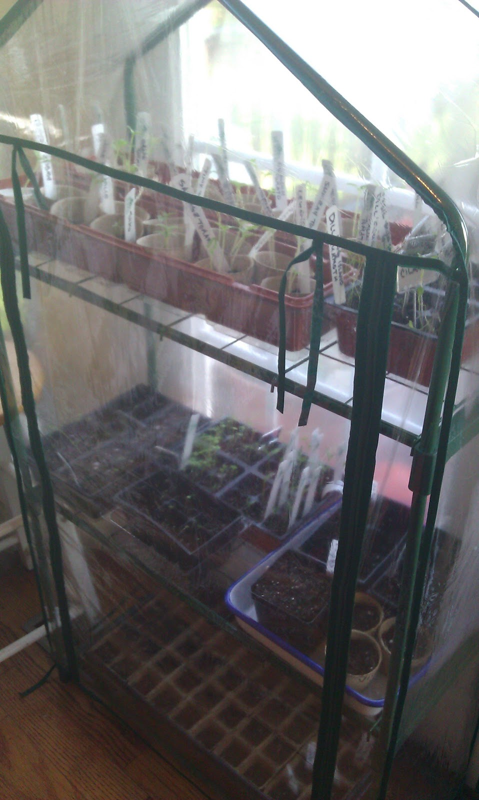lavender cove my indoor zippered greenhouse love it