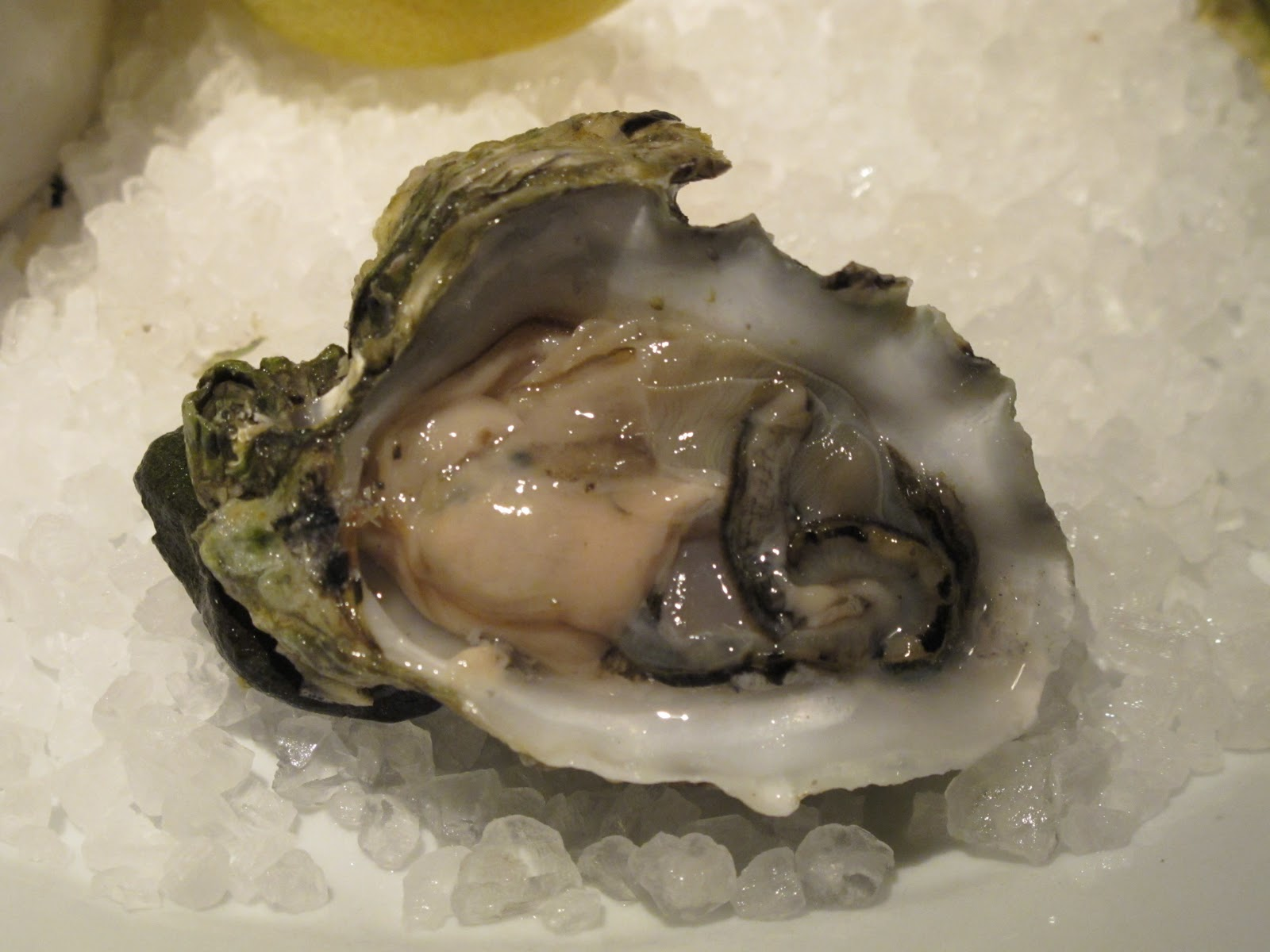 Live oysters with pearls inside - photo#25