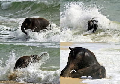 elefante+no+mar.jpg (720×508)