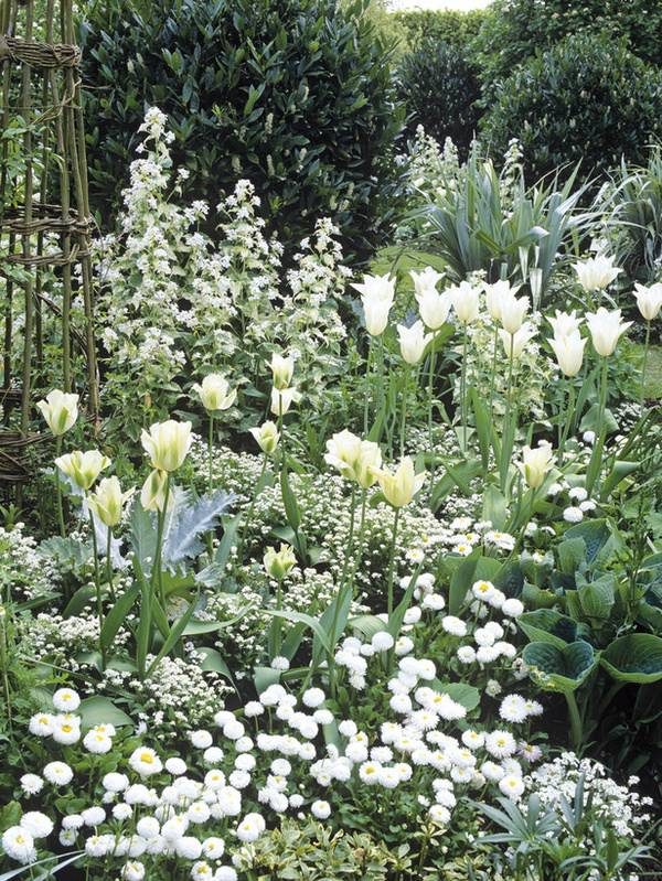 rosas plantas jardim:Jardim só com flores brancas..lindas!!