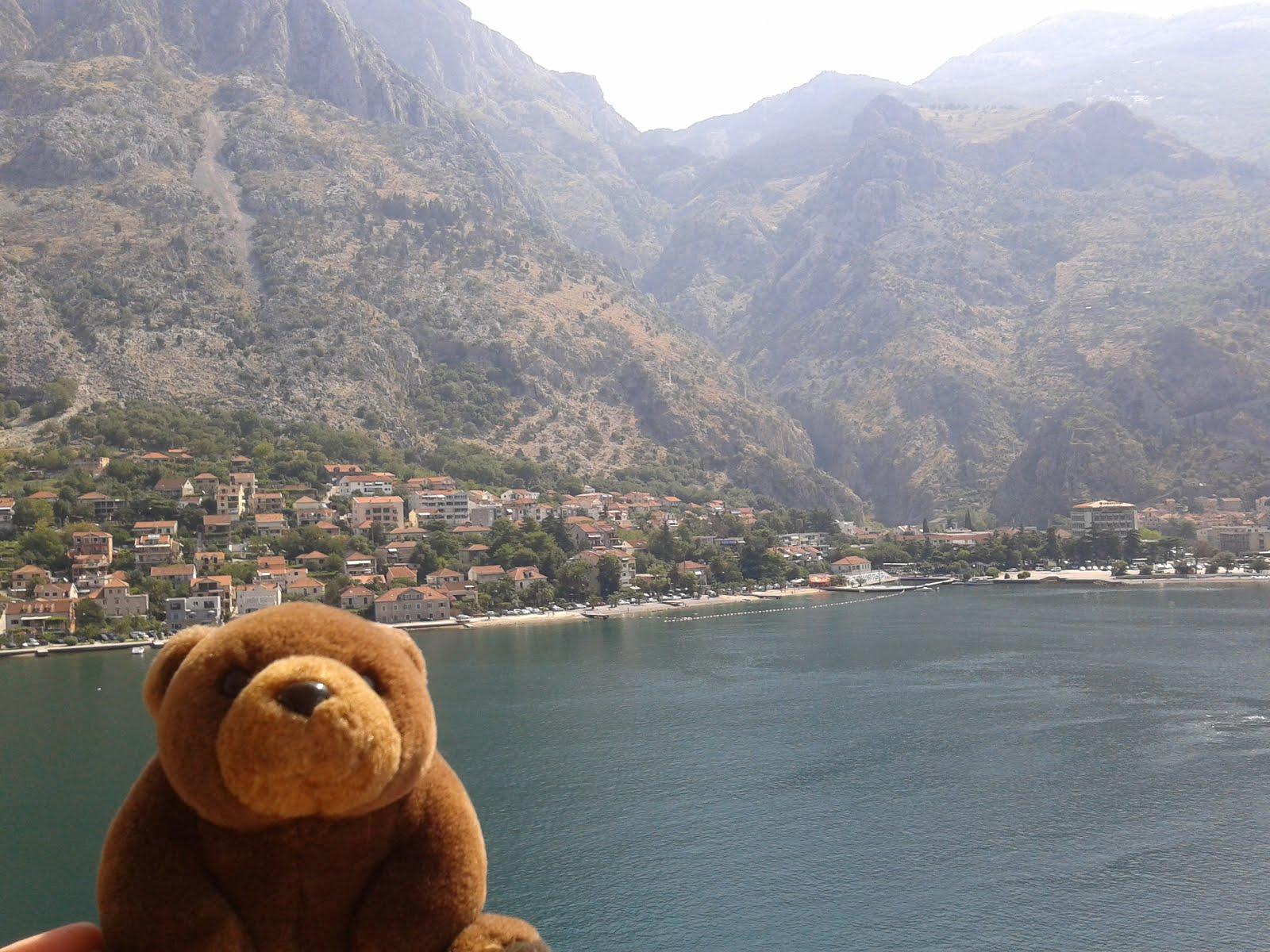 Teddy Bear in Kotor, Monte Negro