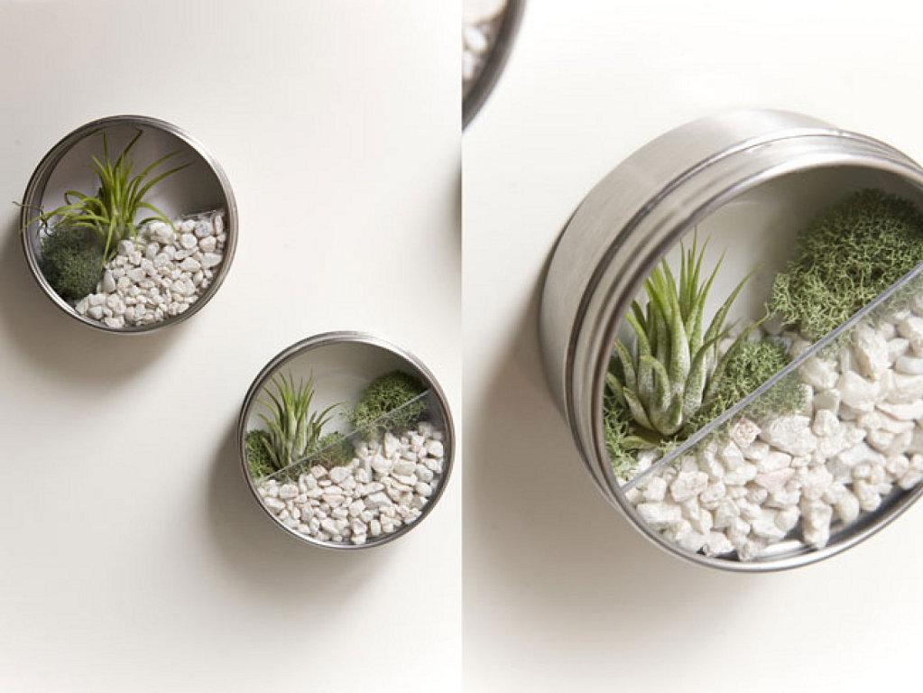 Terrarios miniatura hechos con latas de at n curiosas ideas for Plantas decoradas con piedras