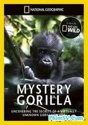 Loài Khỉ Đột Bí Ẩn - Mystery Gorilla