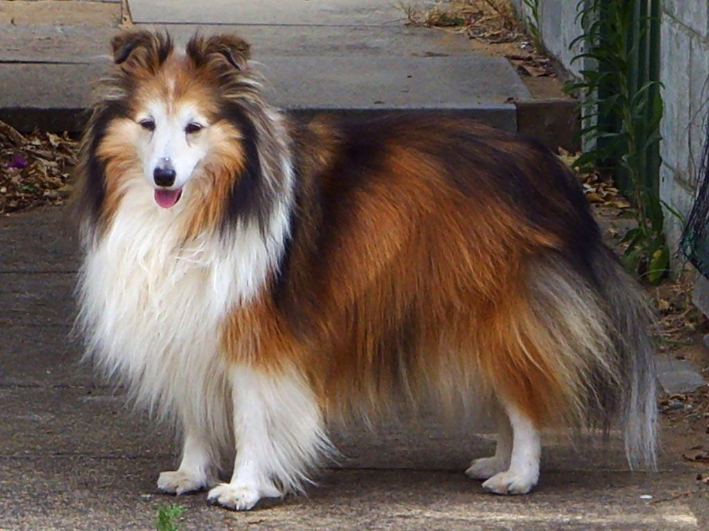 pet shop As Melhores Raças de Cães para Família