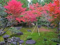 庭園の中にあった紅葉。