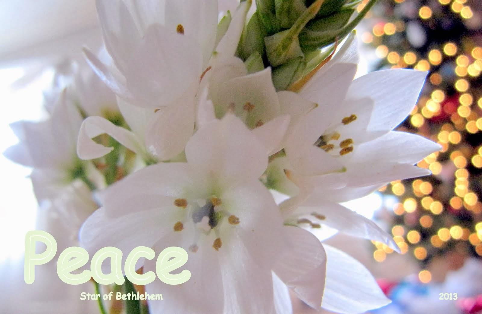 Jesus = peace