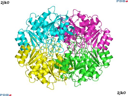 amino acid dating method Amino acid racemization dating of quaternary raised marine terraces in amino acid dating is a useful method for estimating the ages of raised marine terraces a.