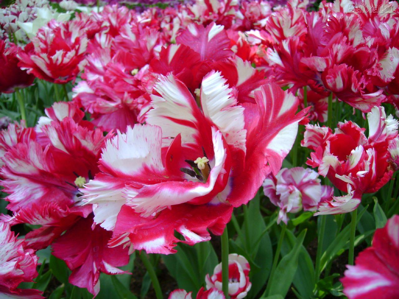 flores no jardim de deus : flores no jardim de deus: compartilhar no twitter compartilhar no facebook compartilhar com