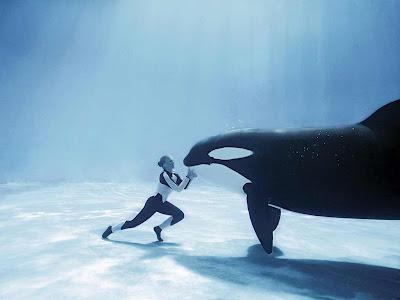 killer whale marine adventure photography