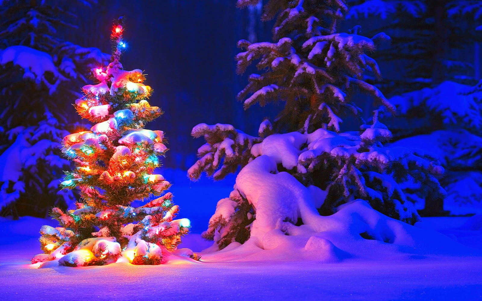 Christmas Tree In Snow Land Wallpaper Wallpapers Hd