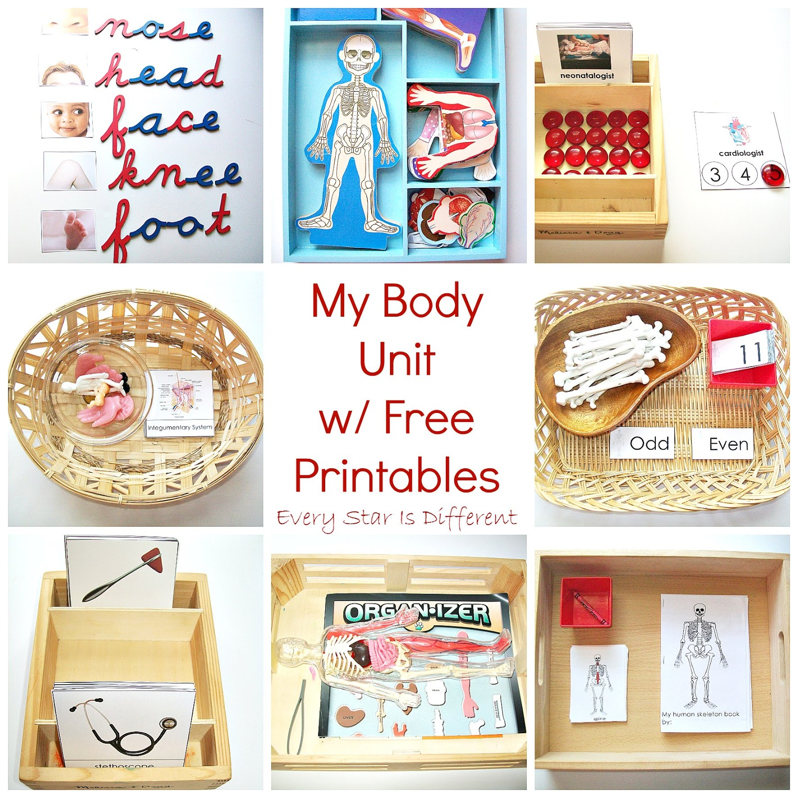 My Body Unit w/ Free Printables (Learn & Play Link Up ...