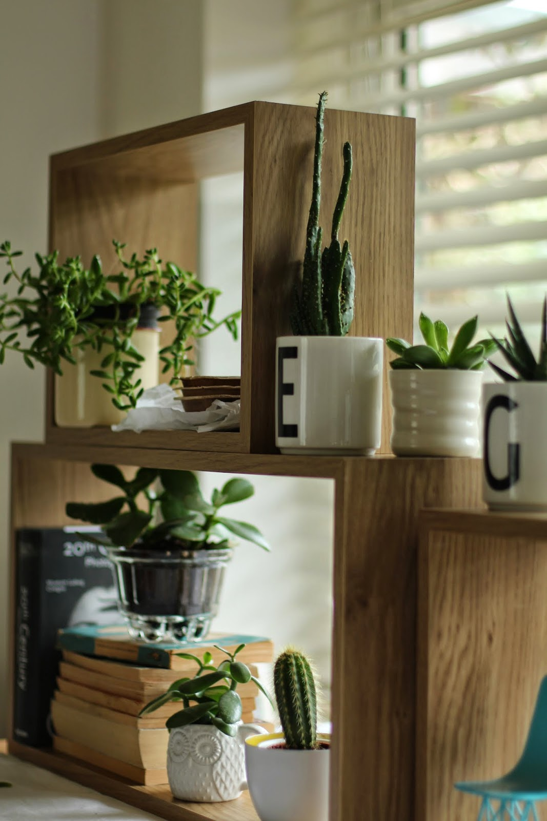 carolinedavis-stylist, trend-daily blog, #urbanjunglebloggers, plants, succulents
