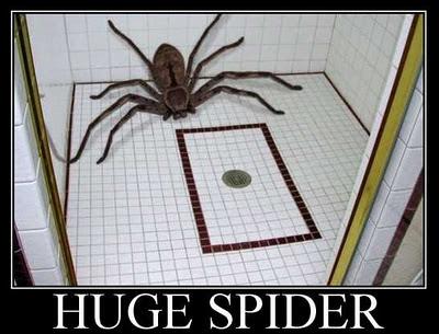 http://4.bp.blogspot.com/-9kI07V6O6iY/Tx9T7y-TSWI/AAAAAAAACP4/EZY8NVZAjQI/s400/huge_spider_sized.jpg