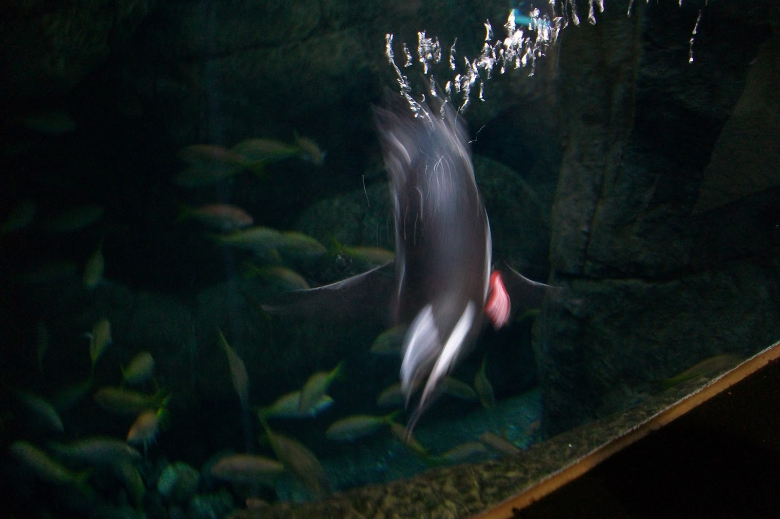 Asheville Janes Ripley 39 S Aquarium