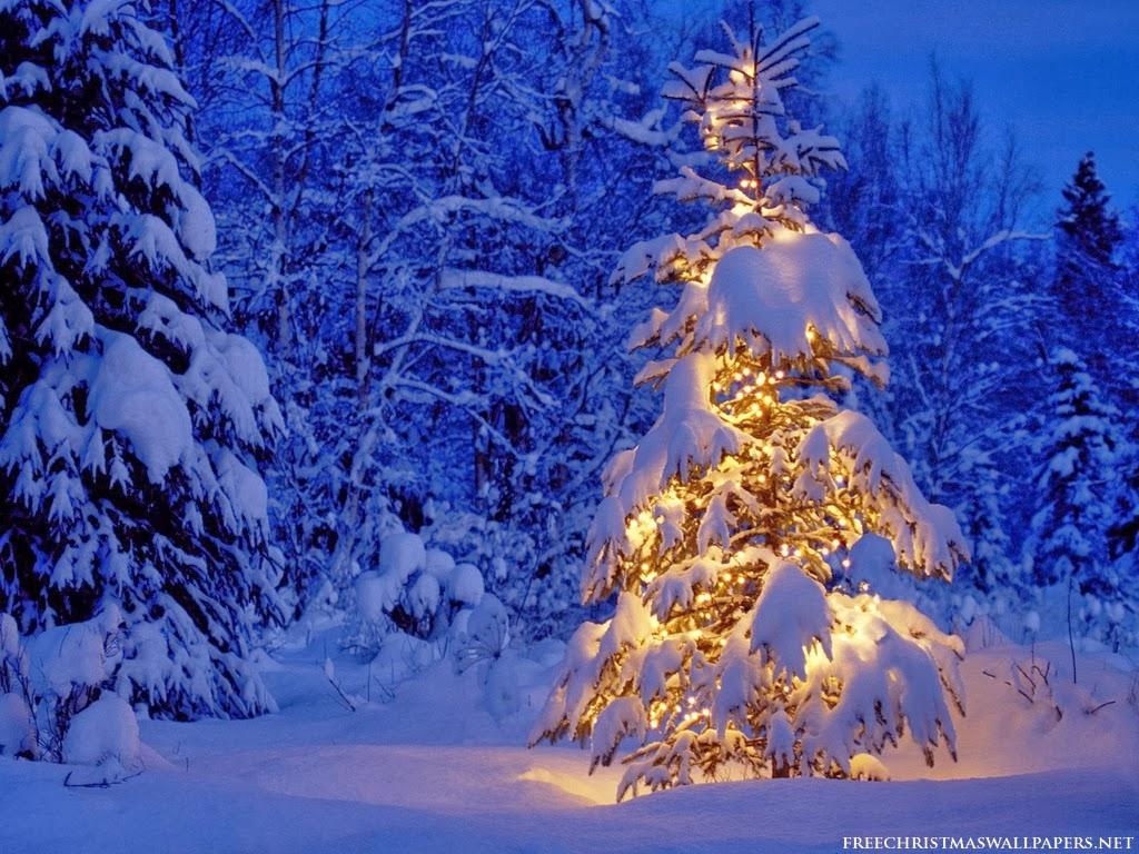 Le fil du partage  - Page 2 Christmas-tree