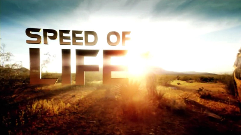 speed of life, discovery channel