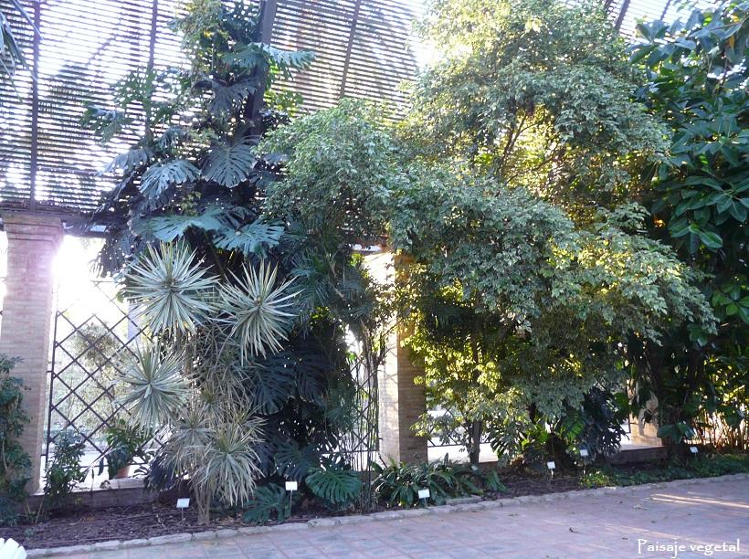 Paisaje vegetal jard n bot nico de valencia for Jardin urbano valencia