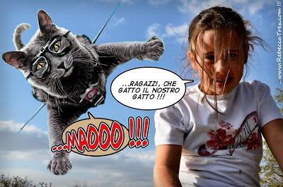 Che gatto il nostro Certosino Blues 2013 rebeccatrex