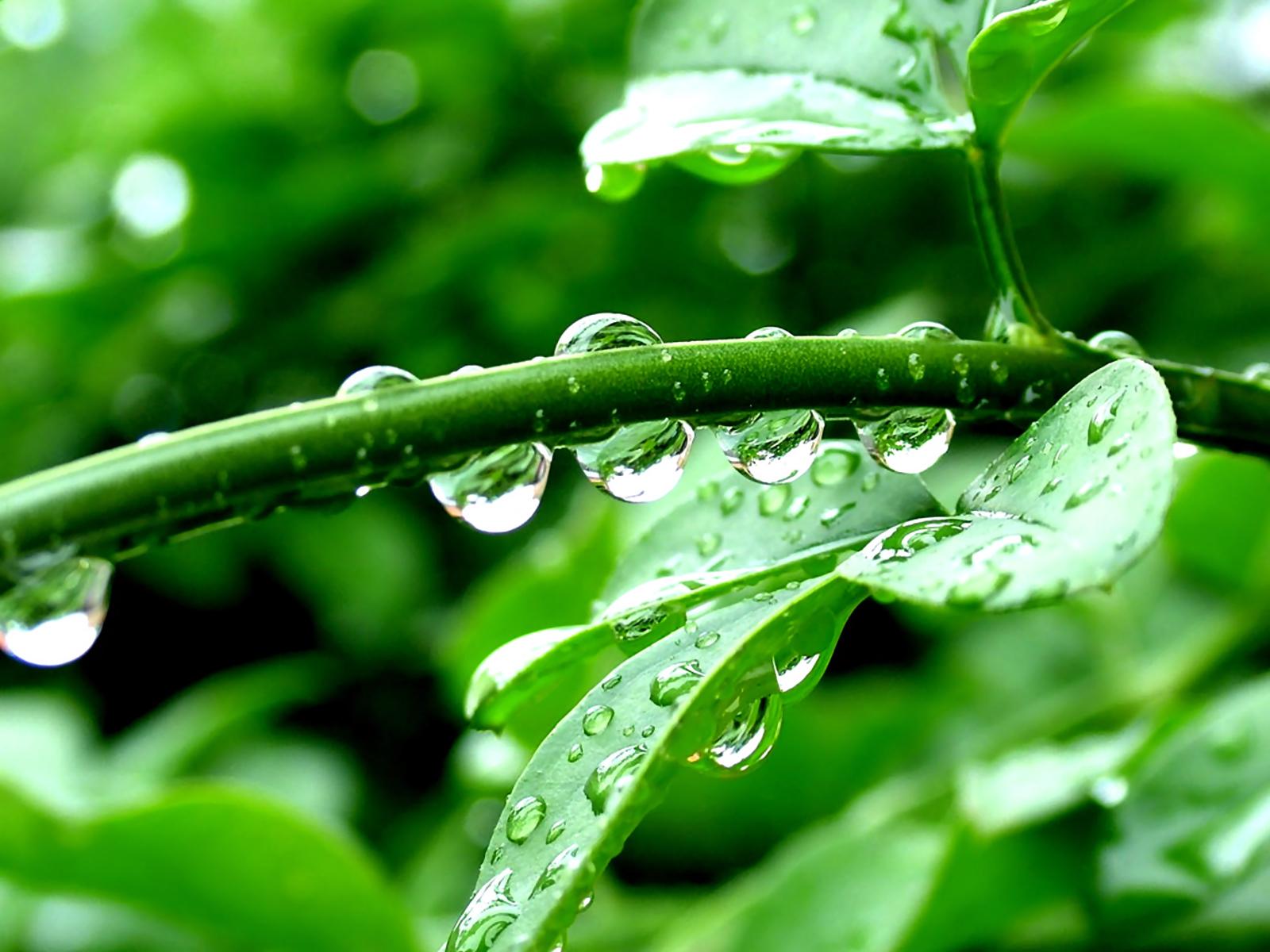 http://4.bp.blogspot.com/-9ldLReGGUNM/TtR5pqOtH-I/AAAAAAAAALg/d4B_p1fDdG4/s1600/nature_0093.jpg