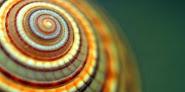 Veja agora a constante de Fibonacci presente nos animais!