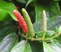 Obat Herbal untuk Beri-Beri