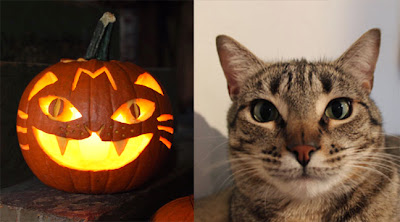 pumpkin-cat-01