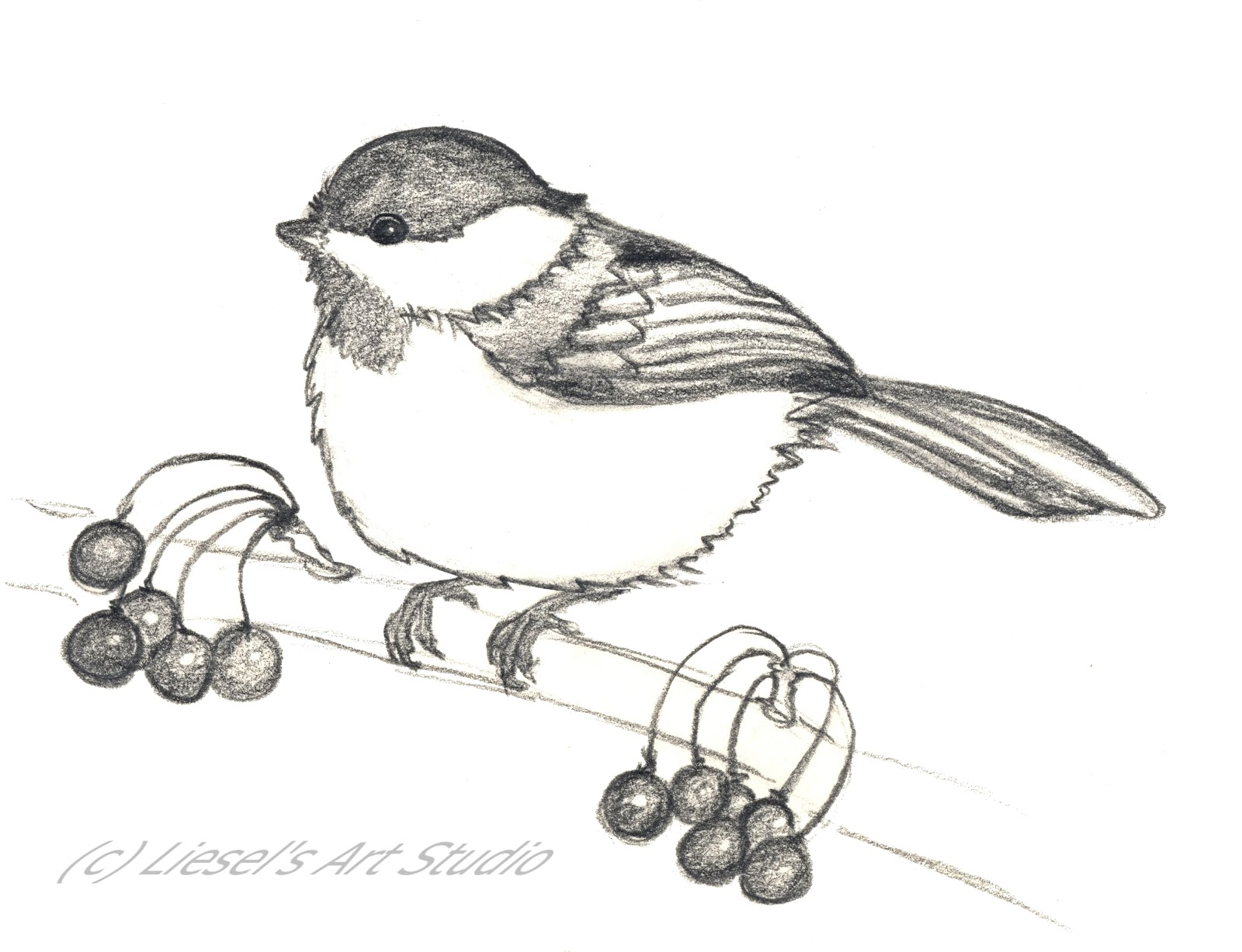 Black Capped Chickadee Drawing Black capped chickadeeBlack Capped Chickadee Drawing