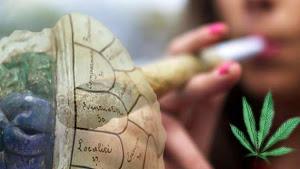 """La marihuana """"desfigura"""" los cerebros a jóvenes consumidores"""