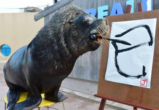 Descubre TU MUNDO: Imagen de la Semana: león marino \