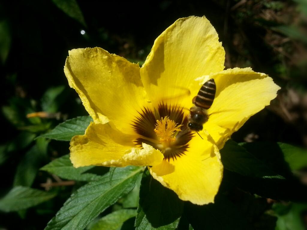 gambar bunga dan lebah
