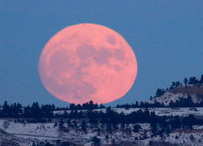 Full Moon big and pink and poking up above the pine trees