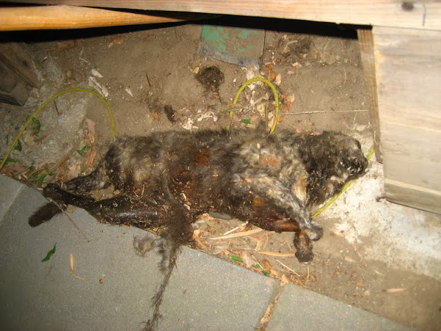 Dead Cat In Road. revealed a bloated cat: