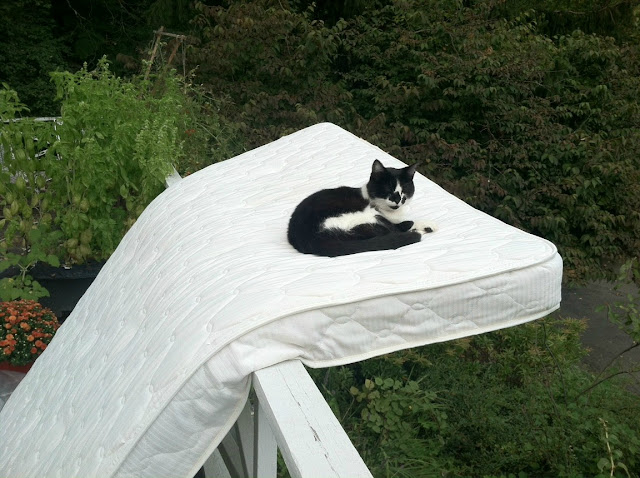 funny cats, cute cat pictures, cat sleeping in mattress