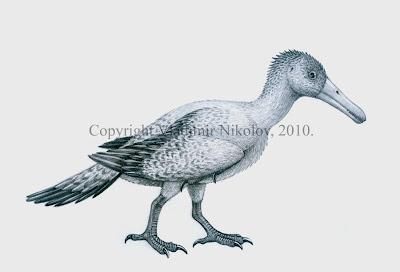 aves prehistoricas de China Longipteryx