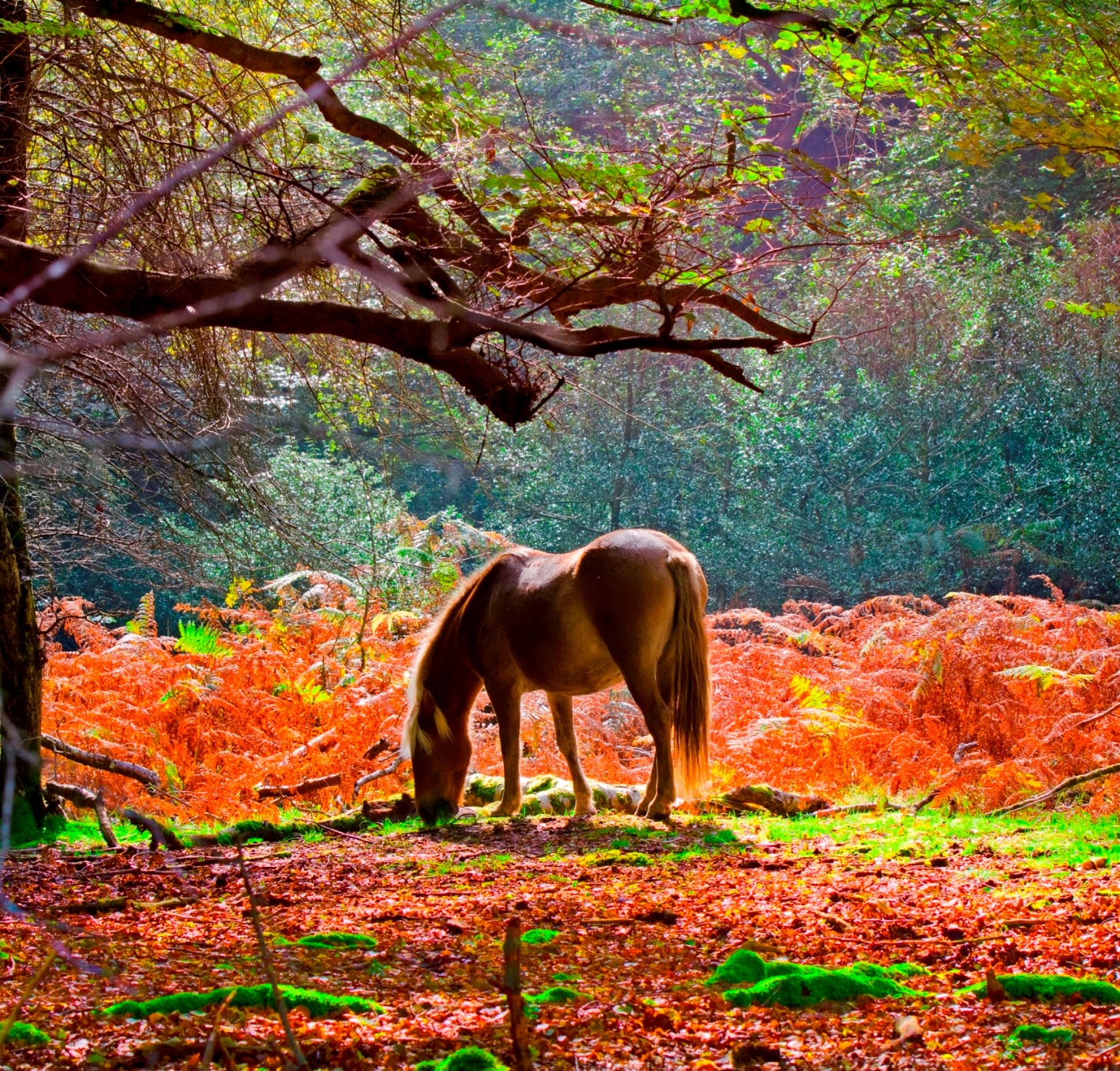New Forest Walking Festival autumn 2014