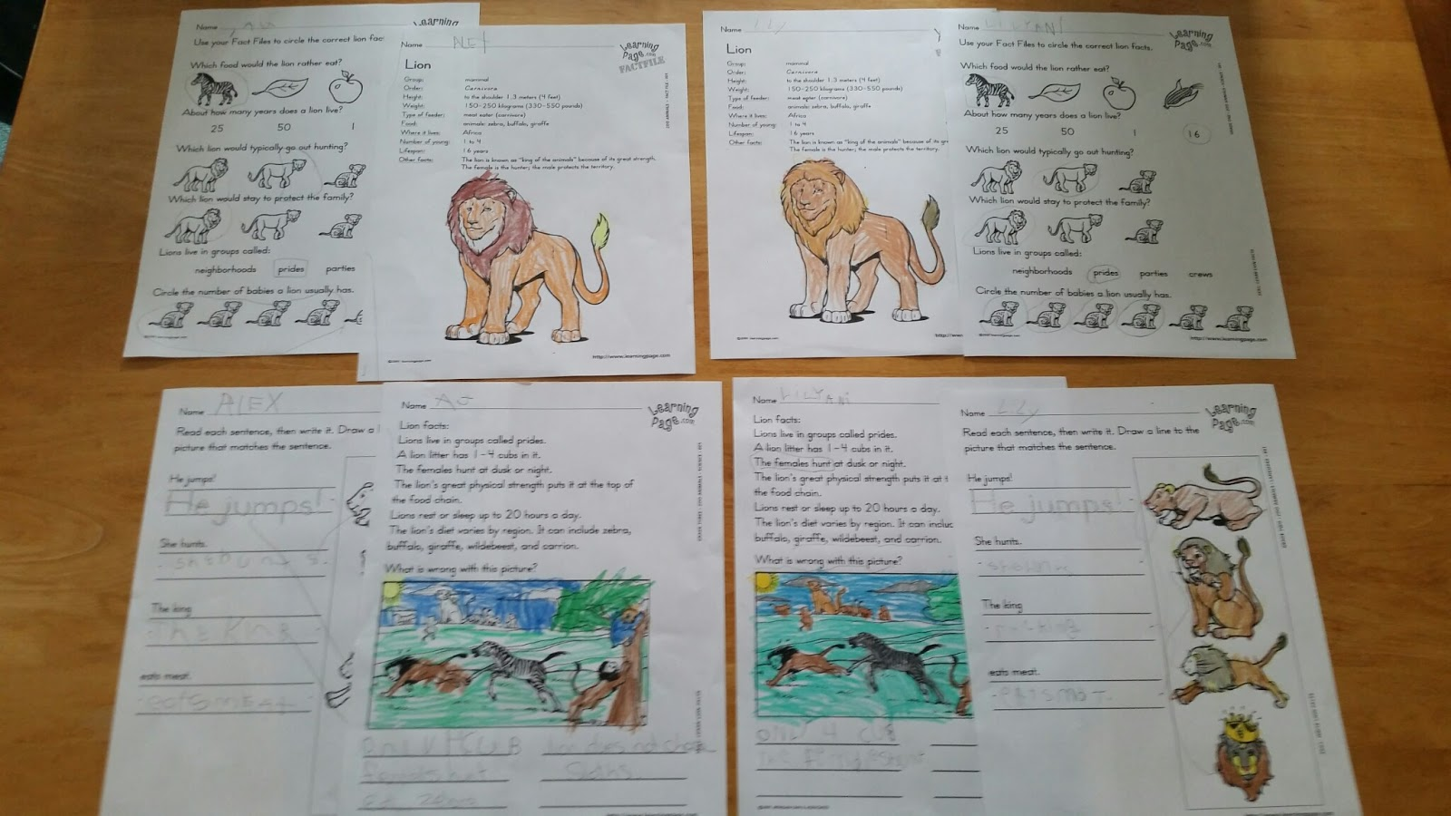 Story Library Lion Story of The Lion And The