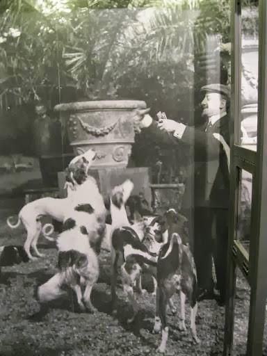 Giacciono Il Cani Legale I Blog D Miei Dello Qui Riccio Studio Ya6YwqZ