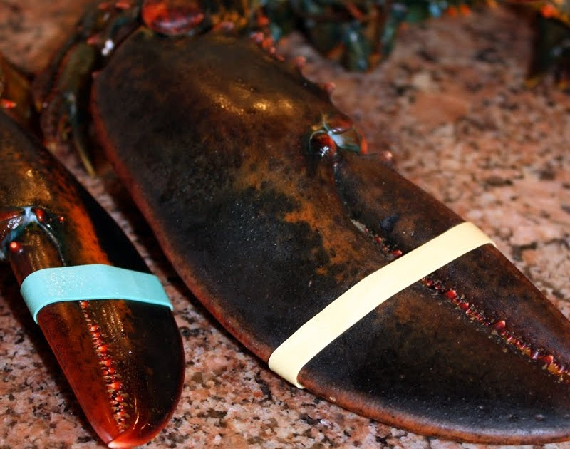 """Lobster Gram Reviews: Pictures of """"Big Daddy"""" 3 lb Live Miane Lobsters from Lobster Gram"""