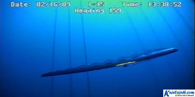Raksasa Laut Dalam Misterius Tertangkap Kamera - Kujelajahi.com