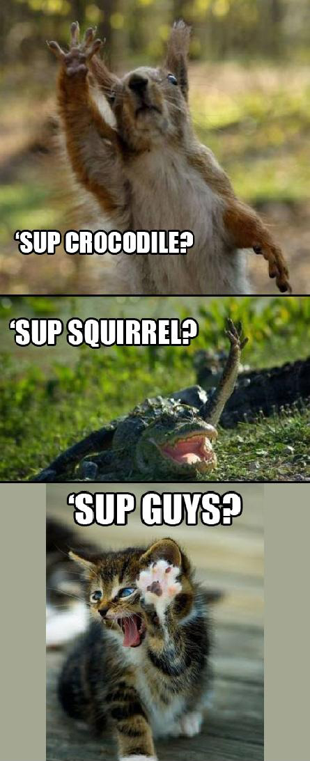 SUP GUYS - Funny Animals