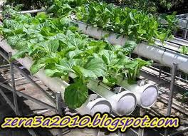مميزات الزراعة بدون تربة
