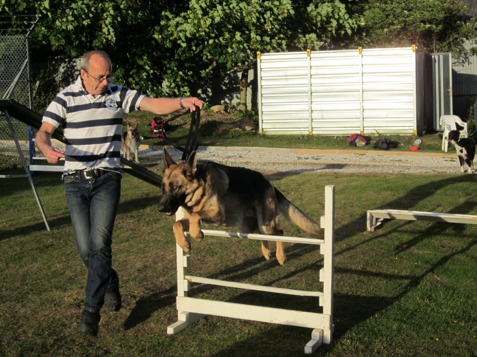 Gables Dog Home Plymouth