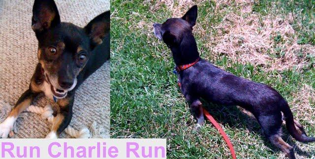 Run, Charlie, Run