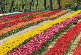 Shalimar and Nishat gardens