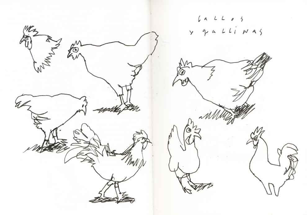 dextrangis: gallos y gallinas